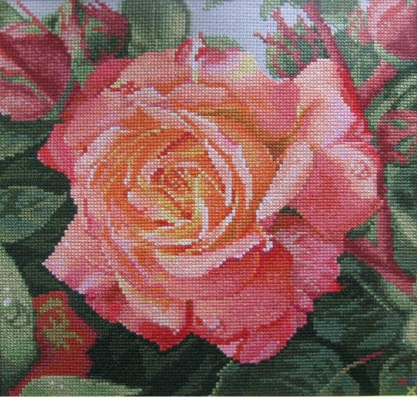 gallery_4_129_407657.jpg