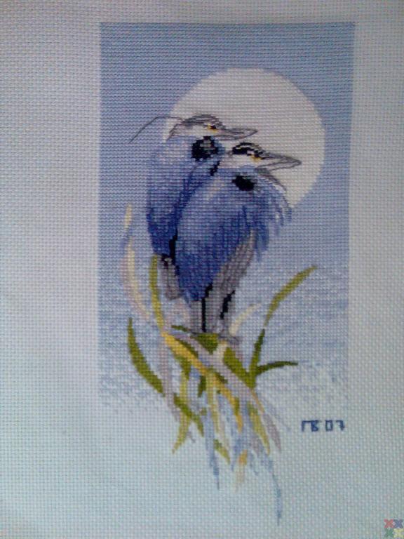 gallery_6373_551_168377.jpg