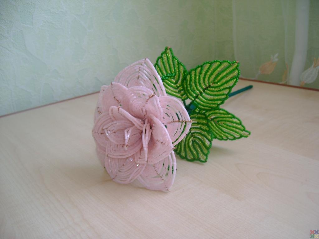 gallery_8416_798_68.jpg