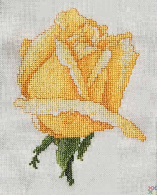 gallery_1521_911_2989.jpg