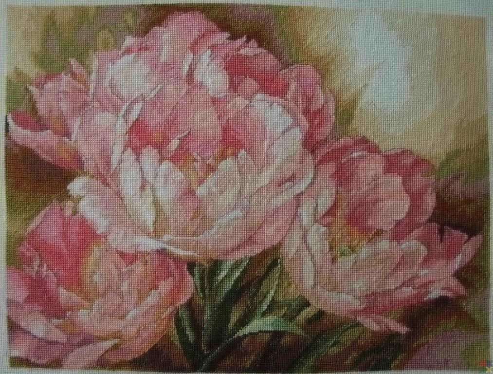 gallery_19_979_742812.jpg