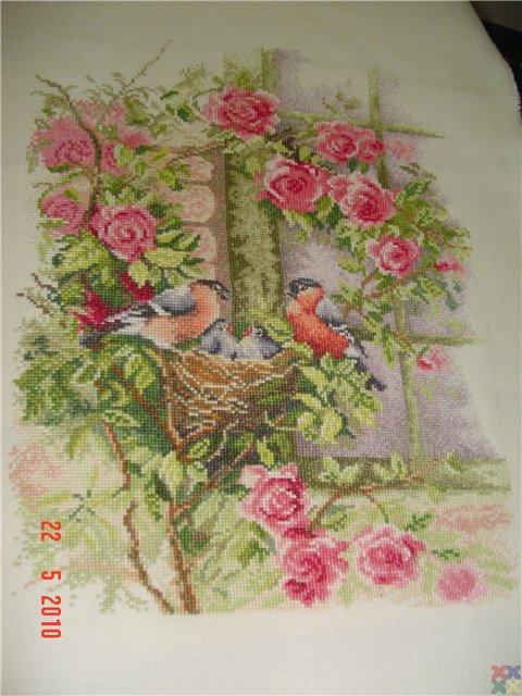 gallery_19_979_49091.jpg