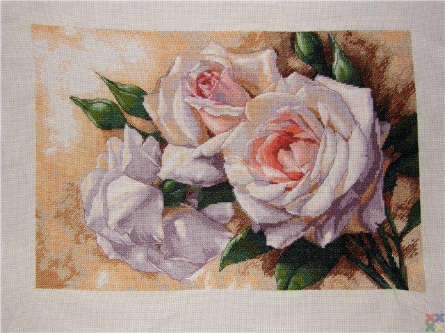 gallery_10891_1252_57784.jpg