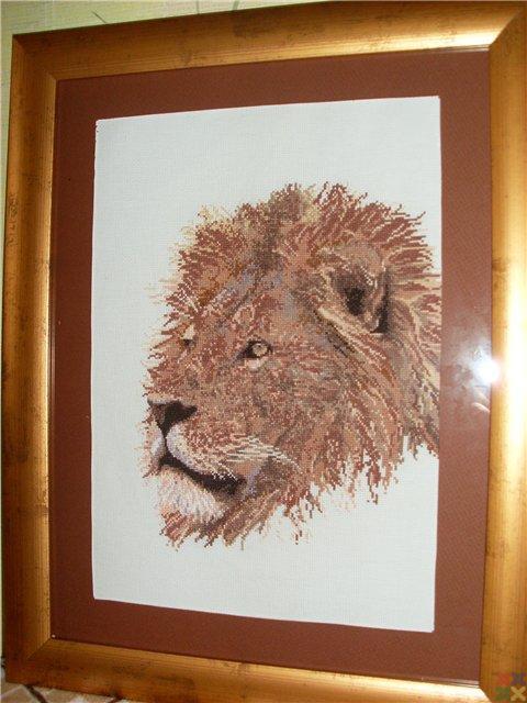 gallery_18987_1300_44973.jpg