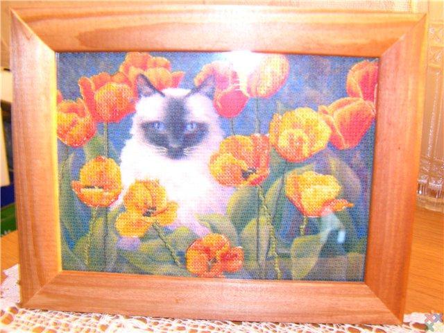 gallery_18987_1302_64547.jpg