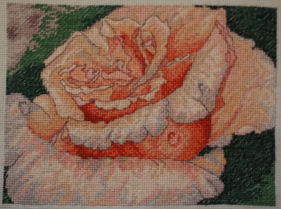 gallery_10891_1568_78911.jpg