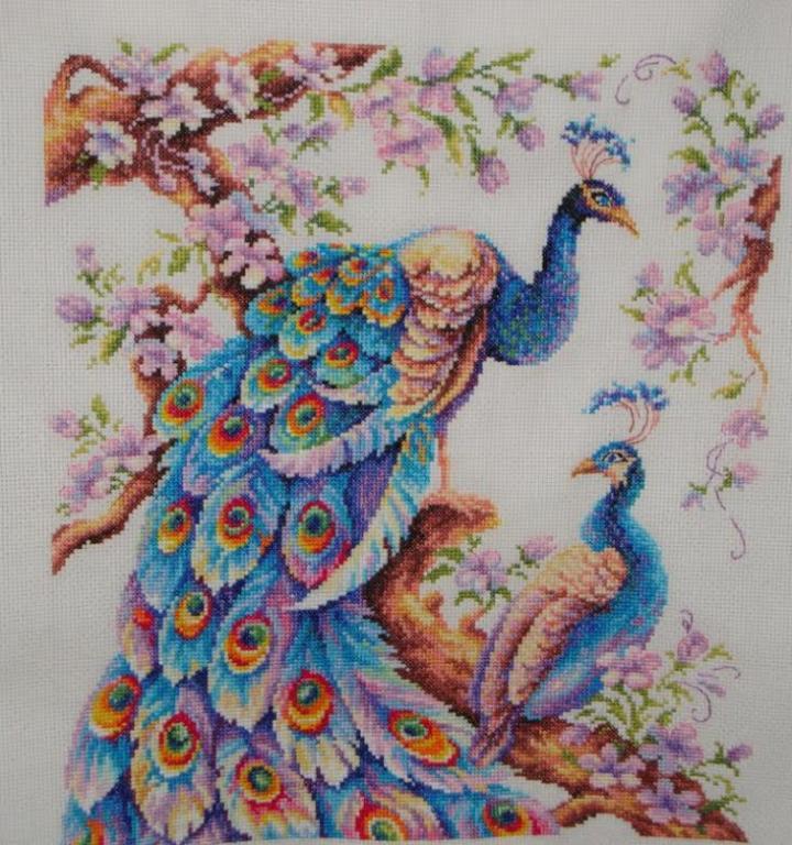 gallery_10891_1616_71860.jpg