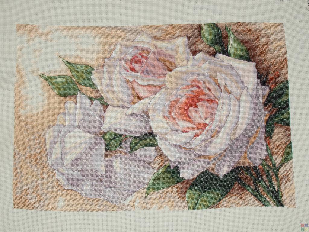 Вышивка срезанные розы дименшенс 43