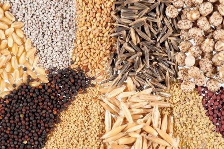 Семена – где найти и популярные виды